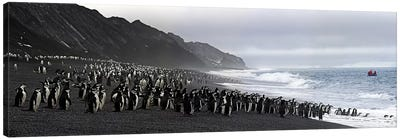 Chinstrap penguins marching to the sea, Bailey Head, Deception Island, Antarctica Canvas Art Print