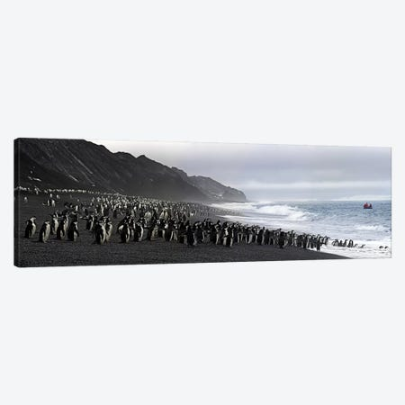 Chinstrap penguins marching to the sea, Bailey Head, Deception Island, Antarctica Canvas Print #PIM8227} by Panoramic Images Canvas Wall Art