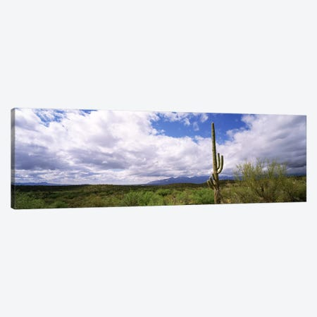 Cactus in a desert, Saguaro National Monument, Tucson, Arizona, USA Canvas Print #PIM8241} by Panoramic Images Canvas Art Print
