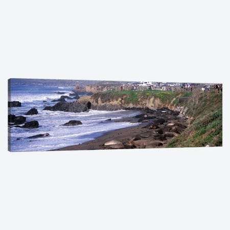 Elephant seals on the beach, San Luis Obispo County, California, USA #2 Canvas Print #PIM8312} by Panoramic Images Canvas Print