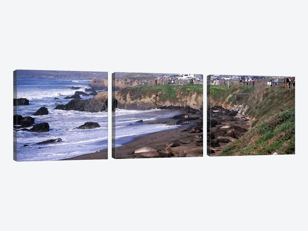 Elephant seals on the beach, San Luis Obispo County, California, USA #2 by Panoramic Images 3-piece Canvas Artwork