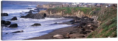 Elephant seals on the beach, San Luis Obispo County, California, USA #2 Canvas Art Print