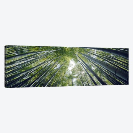 Low angle view of bamboo trees, Hokokuji Temple, Kamakura, Kanagawa Prefecture, Kanto Region, Honshu, Japan Canvas Print #PIM8339} by Panoramic Images Canvas Art Print