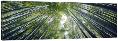 Low angle view of bamboo trees, Hokokuji Temple, Kamakura, Kanagawa Prefecture, Kanto Region, Honshu, Japan Canvas Art Print