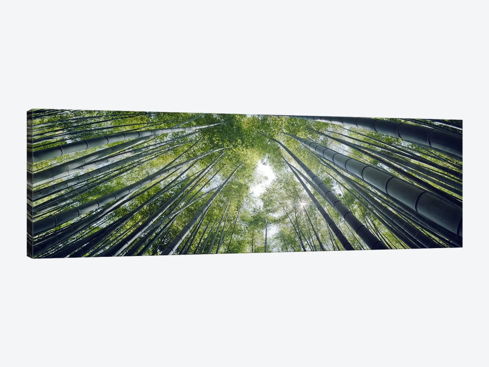 Low angle view of bamboo trees, Hokokuji Temple, Kamakura, Kanagawa Prefecture, Kanto Region, Honshu, Japan by Panoramic Images 1-piece Canvas Art Print