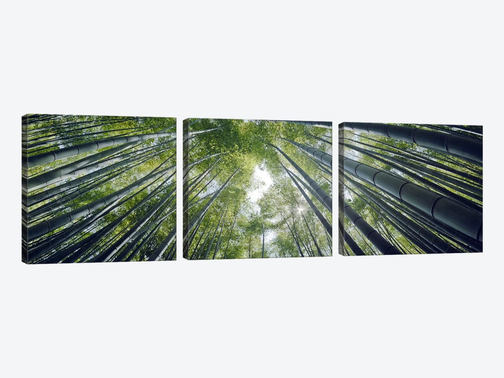 Low angle view of bamboo trees, Hokokuji Temple, Kamakura, Kanagawa Prefecture, Kanto Region, Honshu, Japan by Panoramic Images 3-piece Canvas Art Print