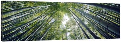 Low angle view of bamboo trees, Hokokuji Temple, Kamakura, Kanagawa Prefecture, Kanto Region, Honshu, Japan Canvas Art Print