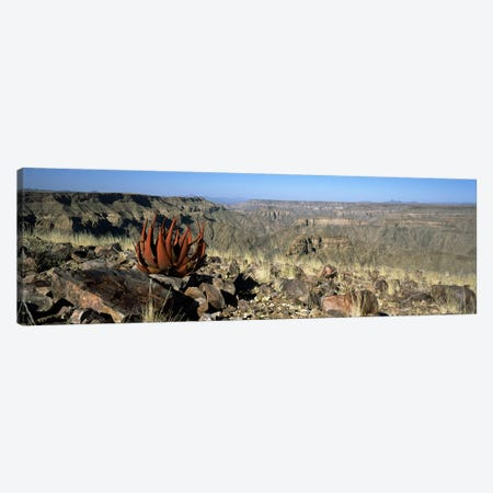 Aloe growing at the edge of a canyonFish River Canyon, Namibia Canvas Print #PIM8348} by Panoramic Images Canvas Art