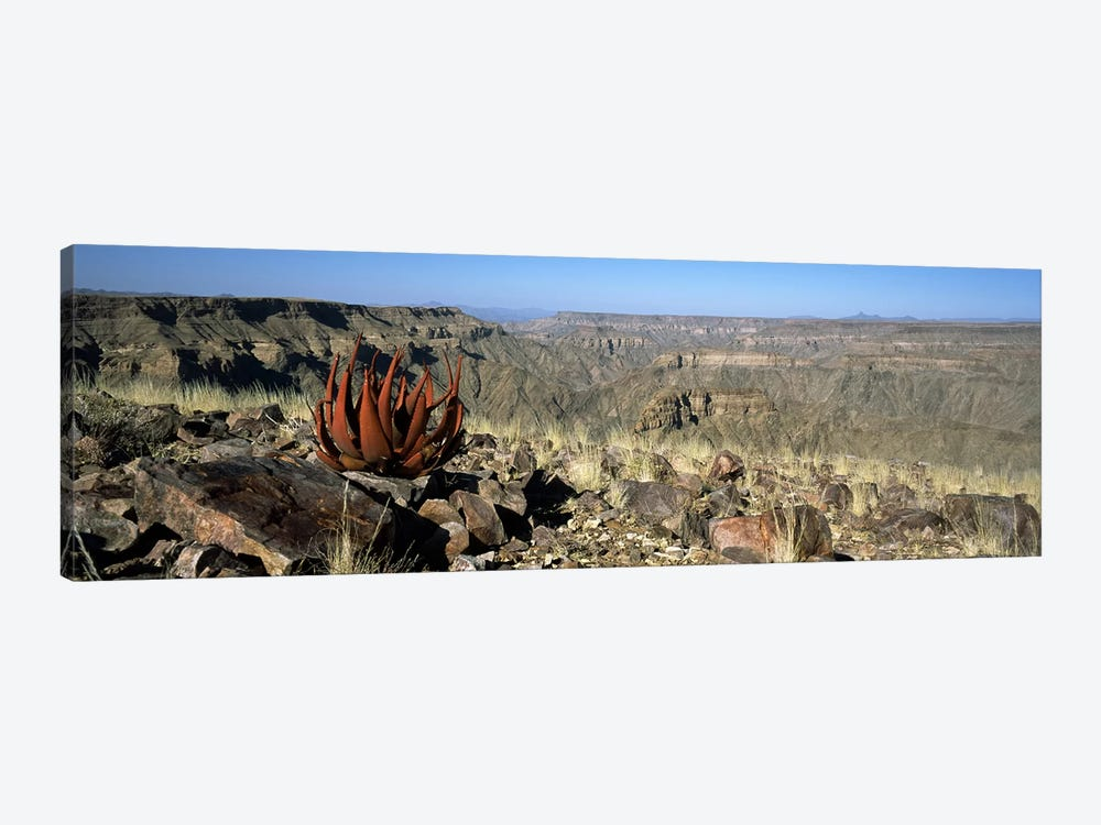 Aloe growing at the edge of a canyonFish River Canyon, Namibia by Panoramic Images 1-piece Canvas Print