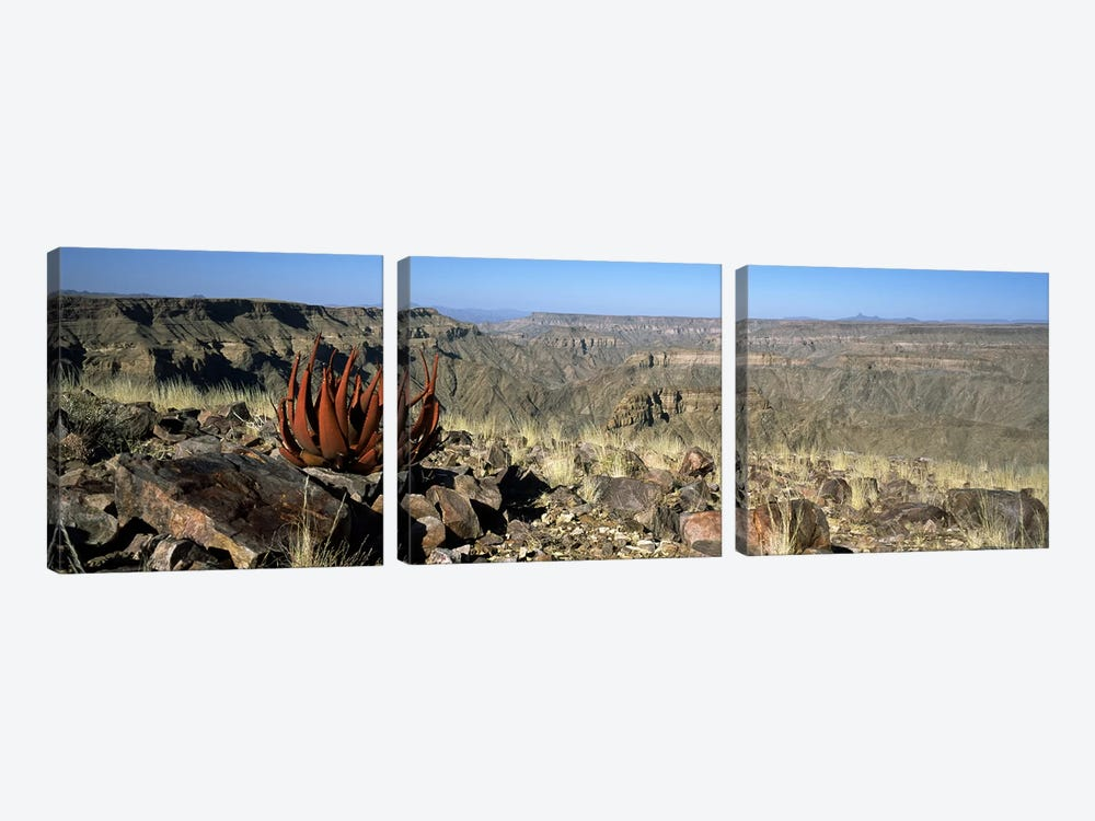 Aloe growing at the edge of a canyonFish River Canyon, Namibia by Panoramic Images 3-piece Canvas Art Print