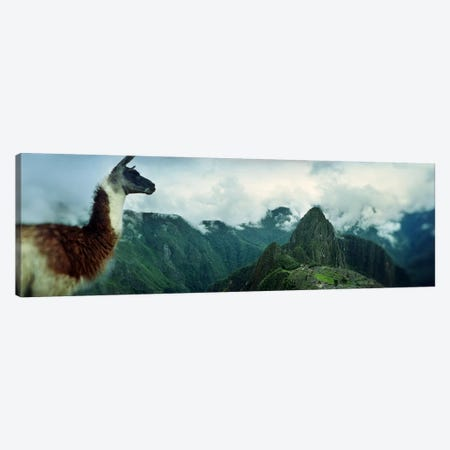 Alpaca (Vicugna pacos) on a mountain with an archaeological site in the backgroundInca Ruins, Machu Picchu, Cusco Region, Peru Canvas Print #PIM8434} by Panoramic Images Art Print