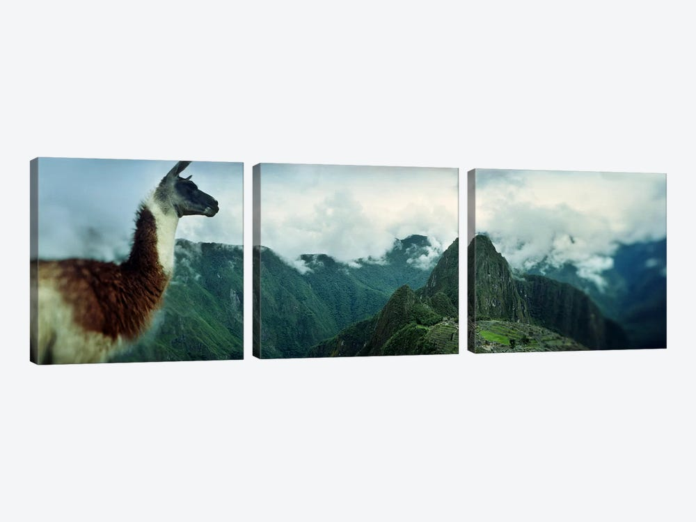 Alpaca (Vicugna pacos) on a mountain with an archaeological site in the backgroundInca Ruins, Machu Picchu, Cusco Region, Peru by Panoramic Images 3-piece Art Print