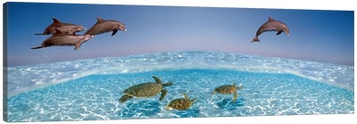 Bottlenose Dolphin Jumping While Turtles Swimming Under Water Canvas Art Print