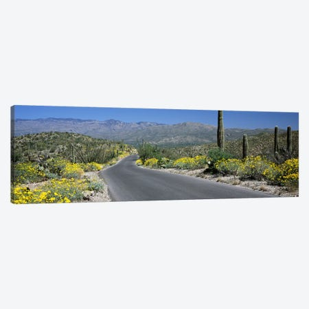 Road passing through a landscape, Saguaro National Park, Tucson, Pima County, Arizona, USA Canvas Print #PIM8526} by Panoramic Images Art Print