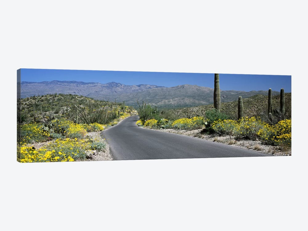 Road passing through a landscape, Saguaro National Park, Tucson, Pima County, Arizona, USA by Panoramic Images 1-piece Canvas Print