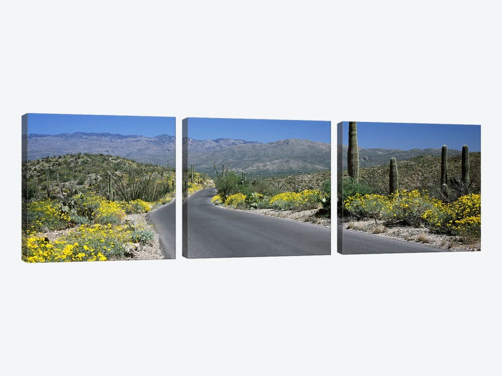 Road passing through a landscape, Saguaro National Park, Tucson, Pima County, Arizona, USA by Panoramic Images 3-piece Canvas Print
