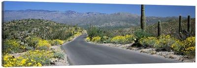 Road passing through a landscape, Saguaro National Park, Tucson, Pima County, Arizona, USA Canvas Art Print