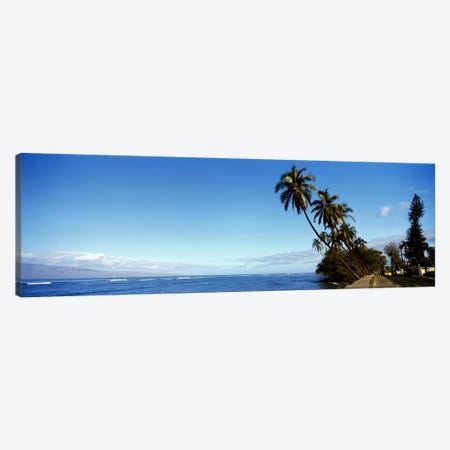 Leaning Palms Along A Coastal Landscape, Lahaina, Maui County, Hawaii, USA Canvas Print #PIM8569} by Panoramic Images Canvas Artwork