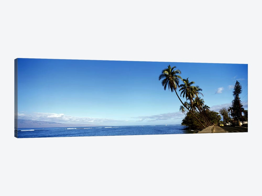 Leaning Palms Along A Coastal Landscape, Lahaina, Maui County, Hawaii, USA by Panoramic Images 1-piece Canvas Art