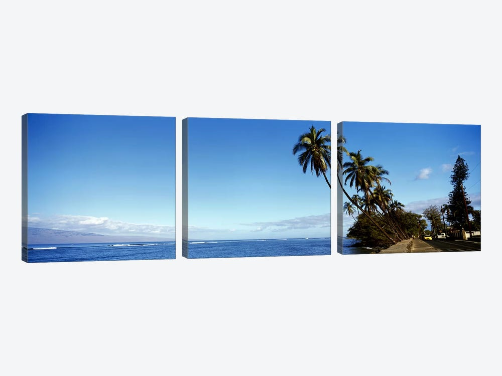 Leaning Palms Along A Coastal Landscape, Lahaina, Maui County, Hawaii, USA by Panoramic Images 3-piece Canvas Art
