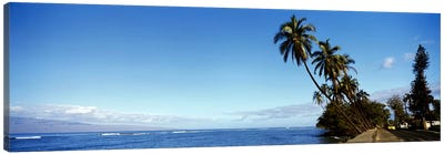 Leaning Palms Along A Coastal Landscape, Lahaina, Maui County, Hawaii, USA Canvas Art Print