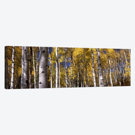 Forest, Grand Teton National Park, Teton County, Wyoming, USA Canvas Print #PIM8596} by Panoramic Images Canvas Wall Art
