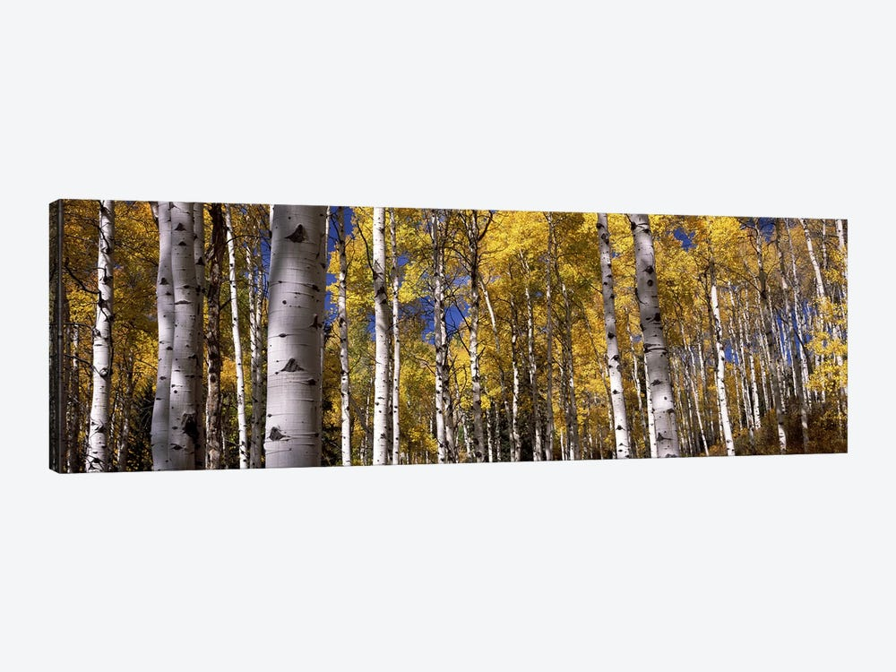 Forest, Grand Teton National Park, Teton County, Wyoming, USA by Panoramic Images 1-piece Canvas Artwork