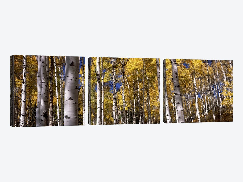 Forest, Grand Teton National Park, Teton County, Wyoming, USA by Panoramic Images 3-piece Canvas Art