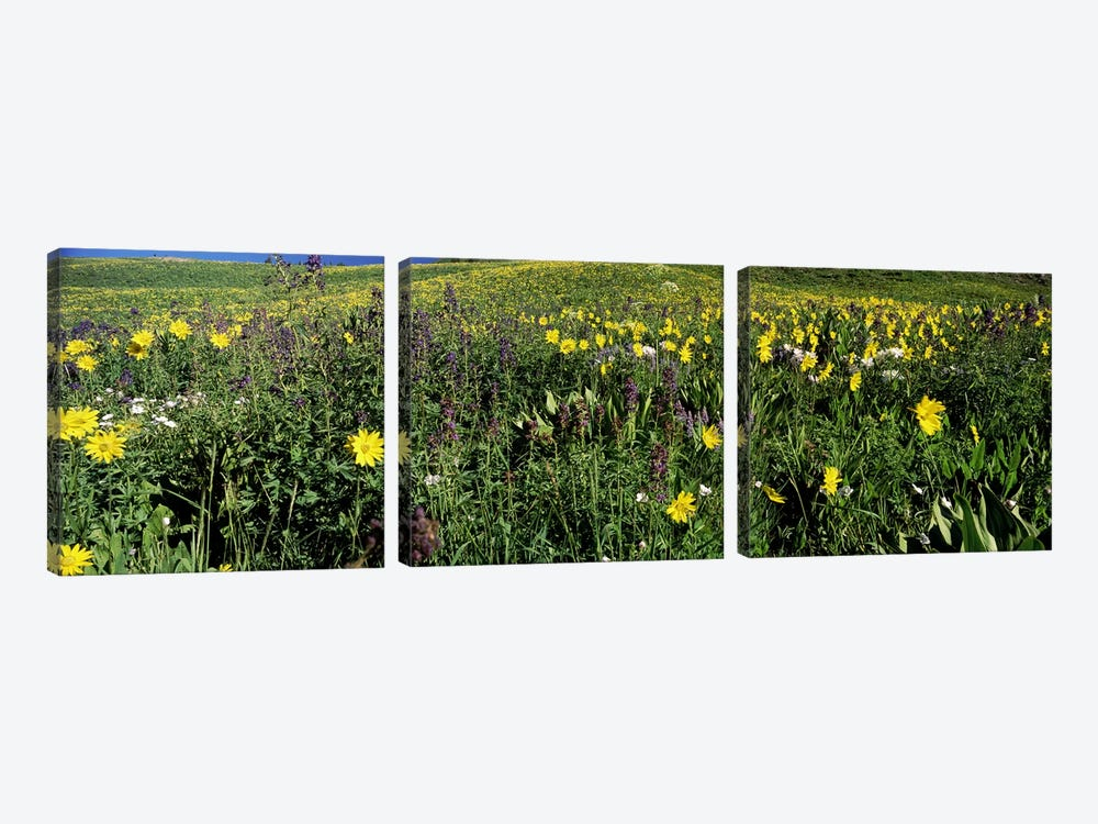 Wildflowers in a field, West Maroon Pass, Crested Butte, Gunnison County, Colorado, USA by Panoramic Images 3-piece Canvas Print