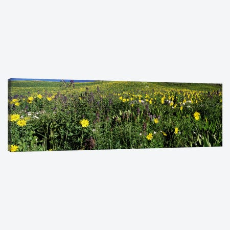 Wildflowers in a field, West Maroon Pass, Crested Butte, Gunnison County, Colorado, USA Canvas Print #PIM8599} by Panoramic Images Art Print