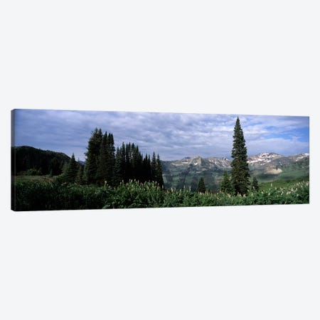 Forest, Washington Gulch Trail, Crested Butte, Gunnison County, Colorado, USA Canvas Print #PIM8608} by Panoramic Images Canvas Art Print