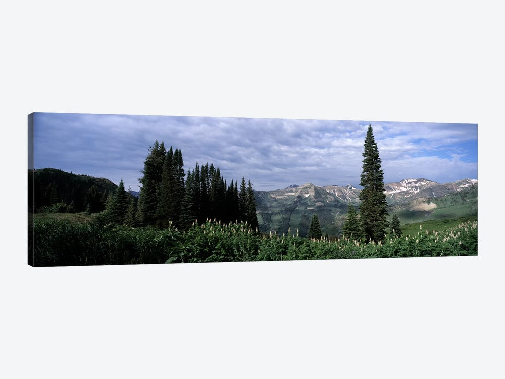 Forest, Washington Gulch Trail, Crested Butte, Gunnison County, Colorado, USA by Panoramic Images 1-piece Canvas Print