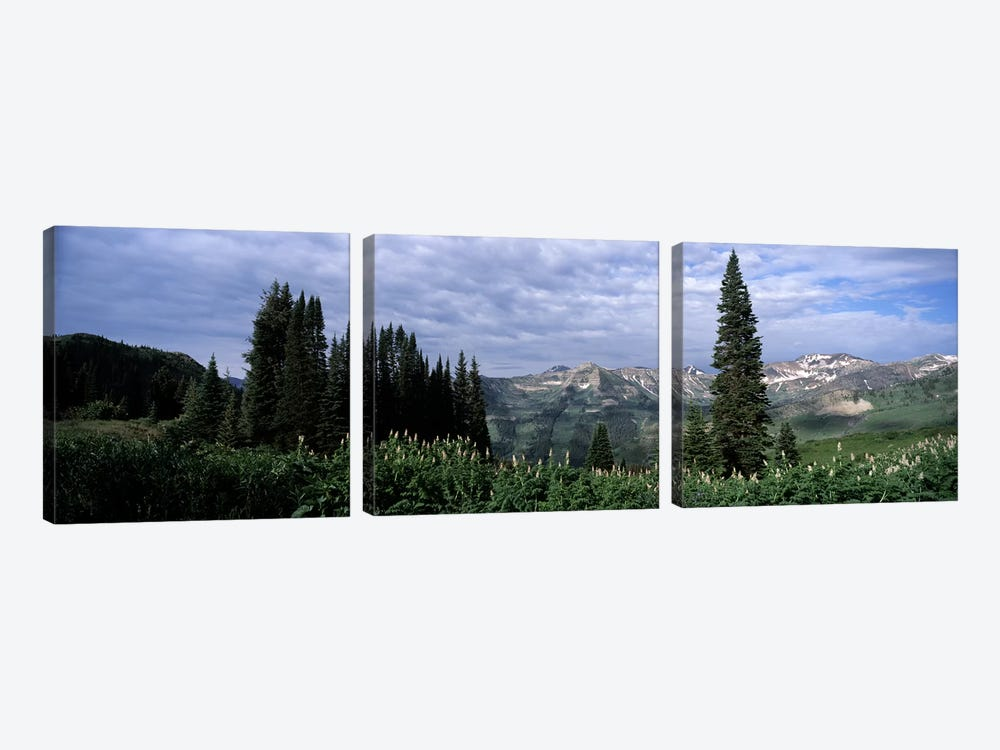Forest, Washington Gulch Trail, Crested Butte, Gunnison County, Colorado, USA 3-piece Canvas Art Print