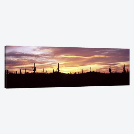 Silhouette of Saguaro cacti (Carnegiea gigantea) on a landscape, Saguaro National Park, Tucson, Pima County, Arizona, USA Canvas Print #PIM8649} by Panoramic Images Art Print