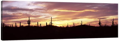 Silhouette of Saguaro cacti (Carnegiea gigantea) on a landscape, Saguaro National Park, Tucson, Pima County, Arizona, USA Canvas Art Print