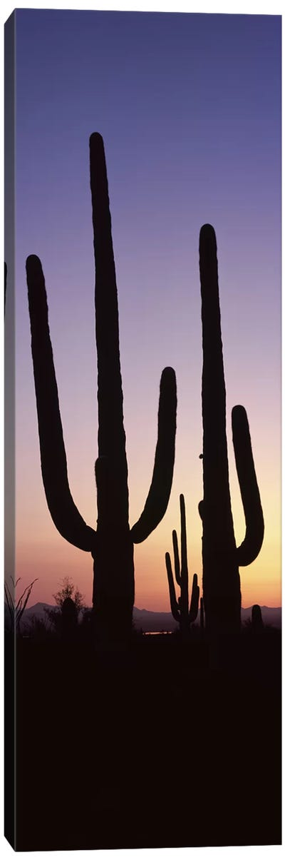 Silhouette of Saguaro cacti (Carnegiea gigantea) on a landscape, Saguaro National Park, Tucson, Pima County, Arizona, USA #2 Canvas Art Print
