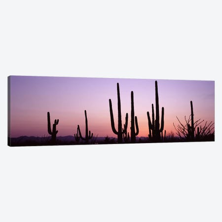 Silhouette of Saguaro cacti (Carnegiea gigantea) on a landscape, Saguaro National Park, Tucson, Pima County, Arizona, USA #3 Canvas Print #PIM8651} by Panoramic Images Canvas Wall Art