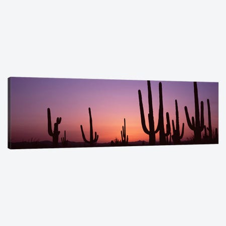 Silhouette of Saguaro cacti (Carnegiea gigantea) on a landscape, Saguaro National Park, Tucson, Pima County, Arizona, USA #4 Canvas Print #PIM8652} by Panoramic Images Canvas Art