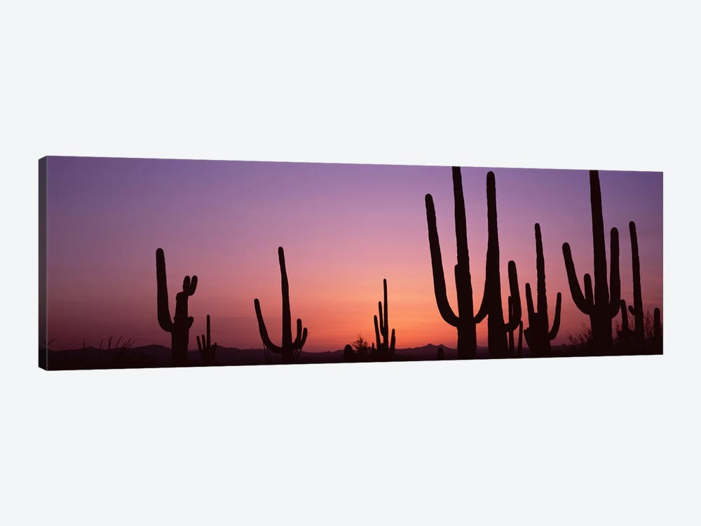 Silhouette of Saguaro cacti (Carnegiea gigantea) on a landscape, Saguaro National Park, Tucson, Pima County, Arizona, USA #4 by Panoramic Images 1-piece Canvas Art