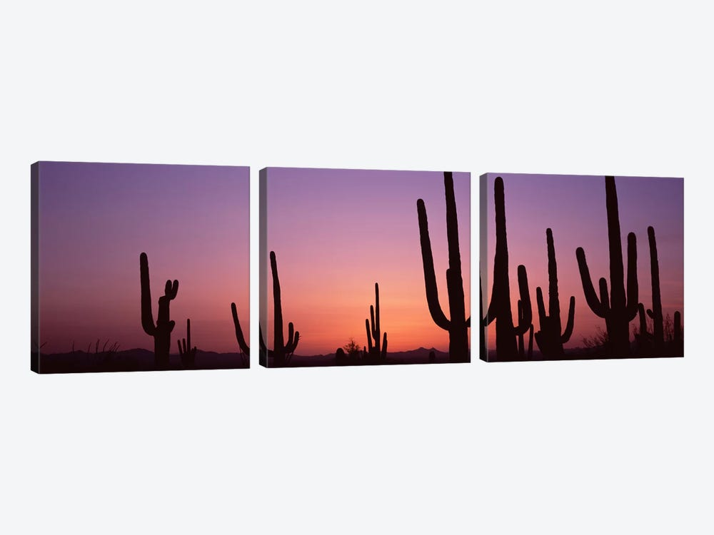 Silhouette of Saguaro cacti (Carnegiea gigantea) on a landscape, Saguaro National Park, Tucson, Pima County, Arizona, USA #4 by Panoramic Images 3-piece Canvas Wall Art