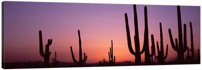 Silhouette of Saguaro cacti (Carnegiea gigantea) on a landscape, Saguaro National Park, Tucson, Pima County, Arizona, USA #4 Canvas Art Print