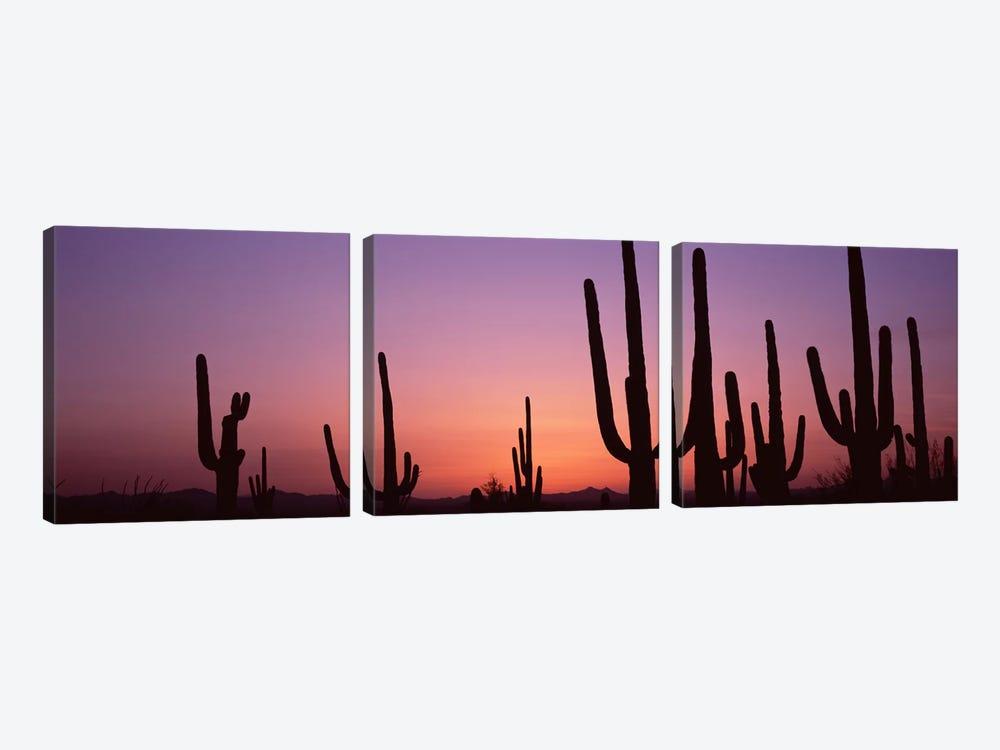 Silhouette of Saguaro cacti (Carnegiea gigantea) on a landscape, Saguaro National Park, Tucson, Pima County, Arizona, USA #4 by Panoramic Images 3-piece Canvas Wall Art