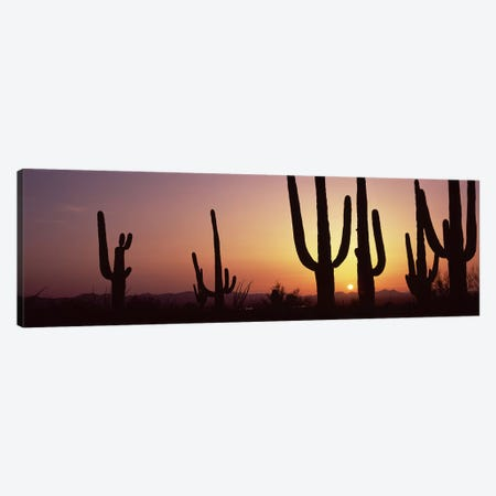 Silhouette of Saguaro cacti (Carnegiea gigantea) on a landscape, Saguaro National Park, Tucson, Pima County, Arizona, USA #5 Canvas Print #PIM8653} by Panoramic Images Canvas Artwork