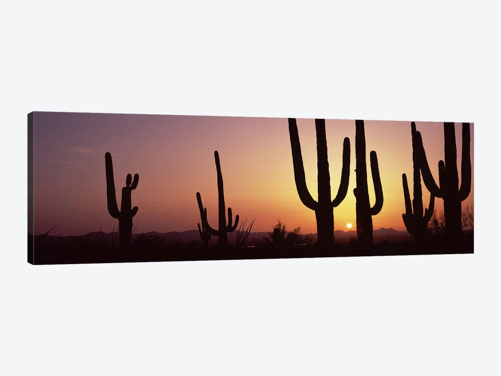 Silhouette of Saguaro cacti (Carnegiea gigantea) on a landscape, Saguaro National Park, Tucson, Pima County, Arizona, USA #5 by Panoramic Images 1-piece Canvas Print