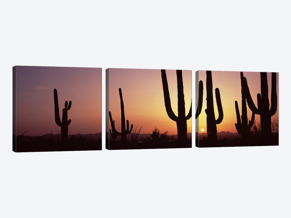 Silhouette of Saguaro cacti (Carnegiea gigantea) on a landscape, Saguaro National Park, Tucson, Pima County, Arizona, USA #5 by Panoramic Images 3-piece Canvas Print