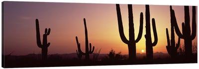 Silhouette of Saguaro cacti (Carnegiea gigantea) on a landscape, Saguaro National Park, Tucson, Pima County, Arizona, USA #5 Canvas Art Print