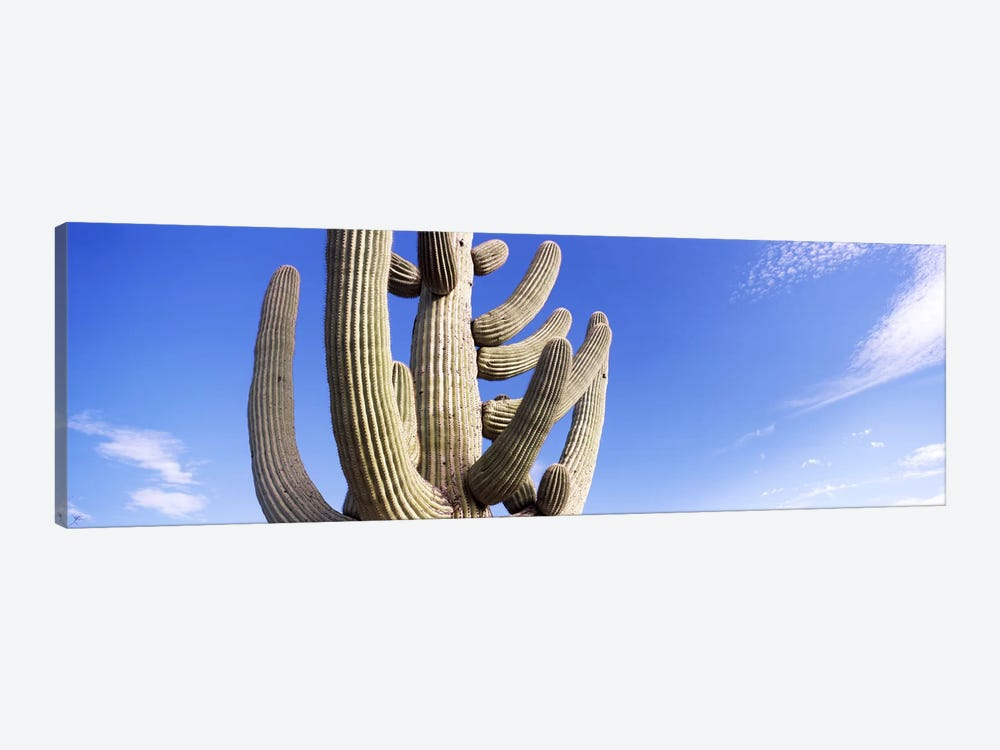 Low angle view of a Saguaro cactus(Carnegiea gigantea), Saguaro National Park, Tucson, Pima County, Arizona, USA by Panoramic Images 1-piece Canvas Art