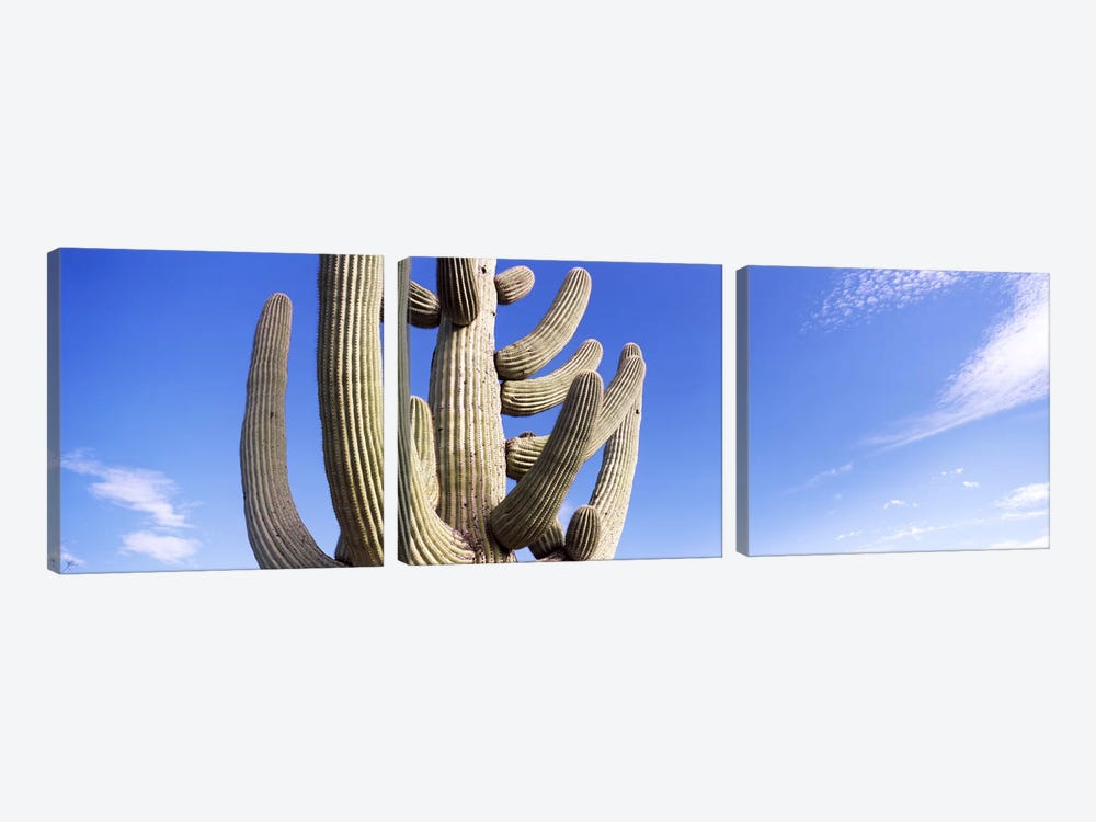 Low angle view of a Saguaro cactus(Carnegiea gigantea), Saguaro National Park, Tucson, Pima County, Arizona, USA by Panoramic Images 3-piece Canvas Art