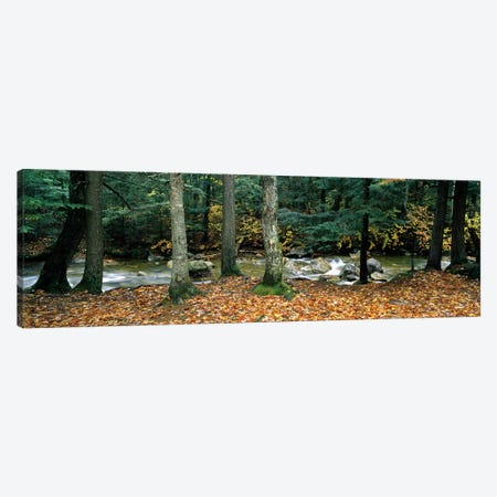 River flowing through a forest, White Mountain National Forest, New Hampshire, USA Canvas Print #PIM8813} by Panoramic Images Canvas Art