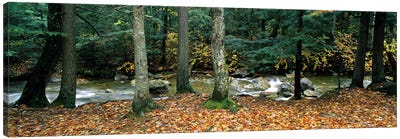 River flowing through a forest, White Mountain National Forest, New Hampshire, USA Canvas Art Print